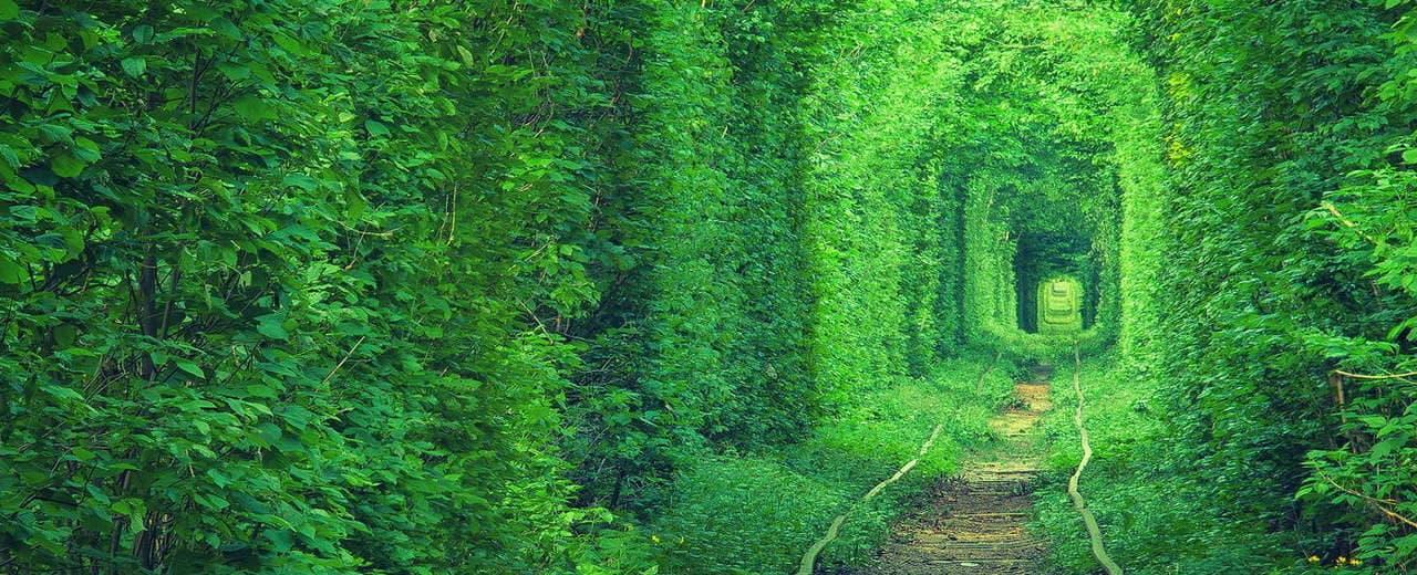 Тоннель любви Клевань, Ровенская область, Украина.
