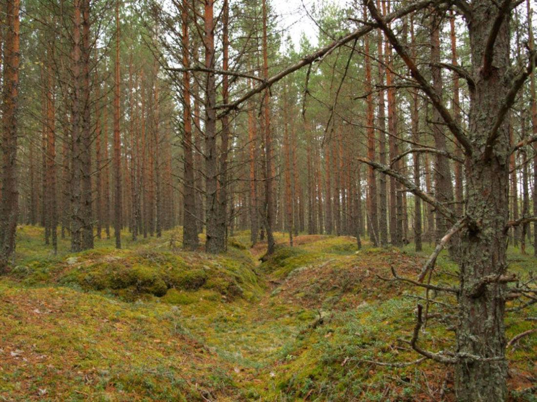 открывающееся лес самара картинки мне понравился